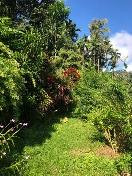 His garden paradise